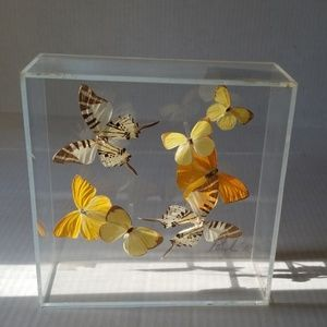 1978 real butterfly's